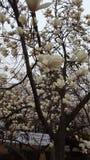Blommor parkerar in i Sydkorea Arkivbilder