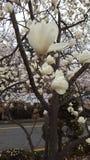 Blommor parkerar in i Sydkorea Arkivfoto