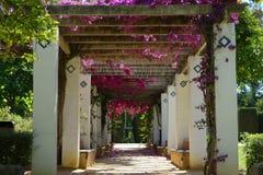 Blommor parkerar in Maria Luisa Park, Seville Royaltyfri Foto