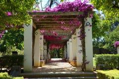 Blommor parkerar in Maria Luisa Park, Seville Arkivfoto
