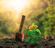 Blommor planterar och arbeta i trädgården härligt solljus för hjälpmedelagaisnt i G Arkivbild