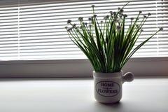 blommor planterar white Arkivfoton