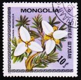 blommor Potaninia Mongolica, serie, circa 1979 Arkivbilder