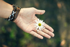 Blommor räcker in Royaltyfri Foto
