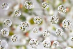 Blommor reflekterar bevattnar in tappar Royaltyfri Fotografi