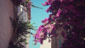 blommor returnerar Arkivfoto