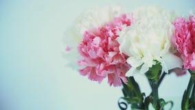 Blommor rotation på vit bakgrund, blom- sammansättning består av nejlika stock video