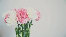 Blommor rotation på vit bakgrund, blom- sammansättning består av nejlika lager videofilmer