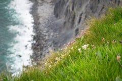 Blommor runt om moherklippor arkivbilder
