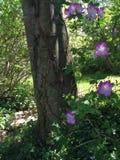 Blommor runt om träd Royaltyfria Foton