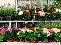 Blommor shoppar Royaltyfria Foton
