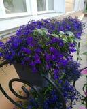 Blommor slösar violets i en blomkruka på farstubron i sommaren fotografering för bildbyråer