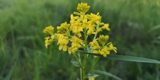 Blommor som är gula i gräsplan royaltyfri foto