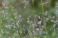 Blommor som blommar arkivfoton