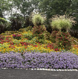 Blommor som blommar i en trädgård Royaltyfri Bild