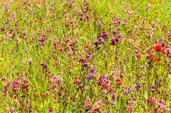 Blommor som blommar i fältet Arkivfoto