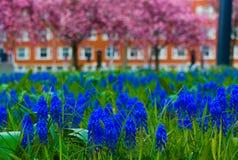 Blommor som blommar i sommaren royaltyfri fotografi