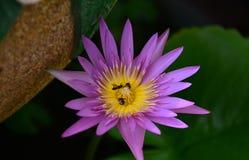 Blommor som blommar i trädgården arkivbilder