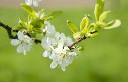 Blommor som blommar på tree Arkivfoton
