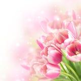 Blommor som blommar tulpan arkivbilder
