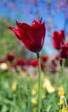 Blommor som dansar 3 royaltyfri fotografi