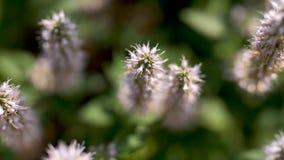 Blommor som dansar i vinden stock video