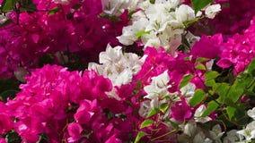 Blommor som darrar i vinden stock video