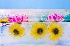 Blommor som frysas i iskvarter Fotografering för Bildbyråer