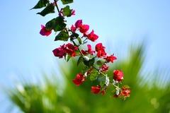 Blommor som hänger av ett träd på en ljus solig dag Royaltyfria Foton