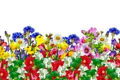 Blommor som isoleras på vitbakgrund Arkivfoton