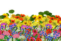 Blommor som isoleras på vitbakgrund Royaltyfria Bilder