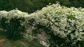 Blommor som klänger ett järnstaket royaltyfri fotografi