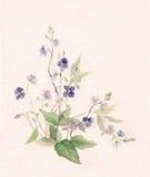 blommor som målar veronica-vattenfärg Arkivfoton