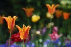 Blommor som ses i parkera Arkivbild