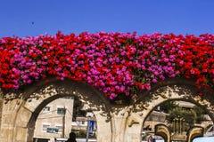 Blommor som smyckar en vägg i Jerusalem royaltyfria bilder
