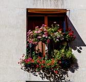 Blommor som smyckar ett fönster i Paris royaltyfri fotografi