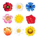 blommor som ställs in fjäder Royaltyfri Fotografi