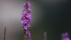 Blommor som svänger på en vind stock video