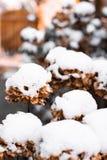 Blommor som t?ckas i sn? royaltyfria bilder