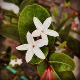 Blommor spelar Royaltyfria Foton