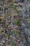Blommor spirade till och med väggarna av den gamla slotten Royaltyfri Fotografi