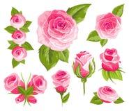 blommor ställde in tappning Rosa rosor och knoppar Gifta sig blommapacken Blommasamlingen av vattenfärgen specificerade den drog  stock illustrationer