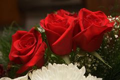 blommor steg Royaltyfria Bilder