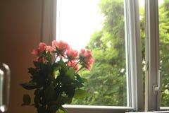 Blommor steg bredvid fönstret arkivfoton