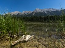 Blommor stenar och berget framme och bak en sjö arkivbild