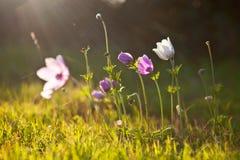 blommor sun in mot Royaltyfria Bilder