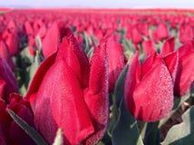 Blommor tidigt på morgonen royaltyfria bilder