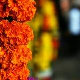 Blommor till liv Royaltyfri Fotografi