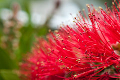 Blommor till stammar Arkivbild