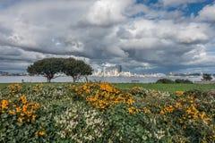 Blommor, träd och Seattle Royaltyfri Bild